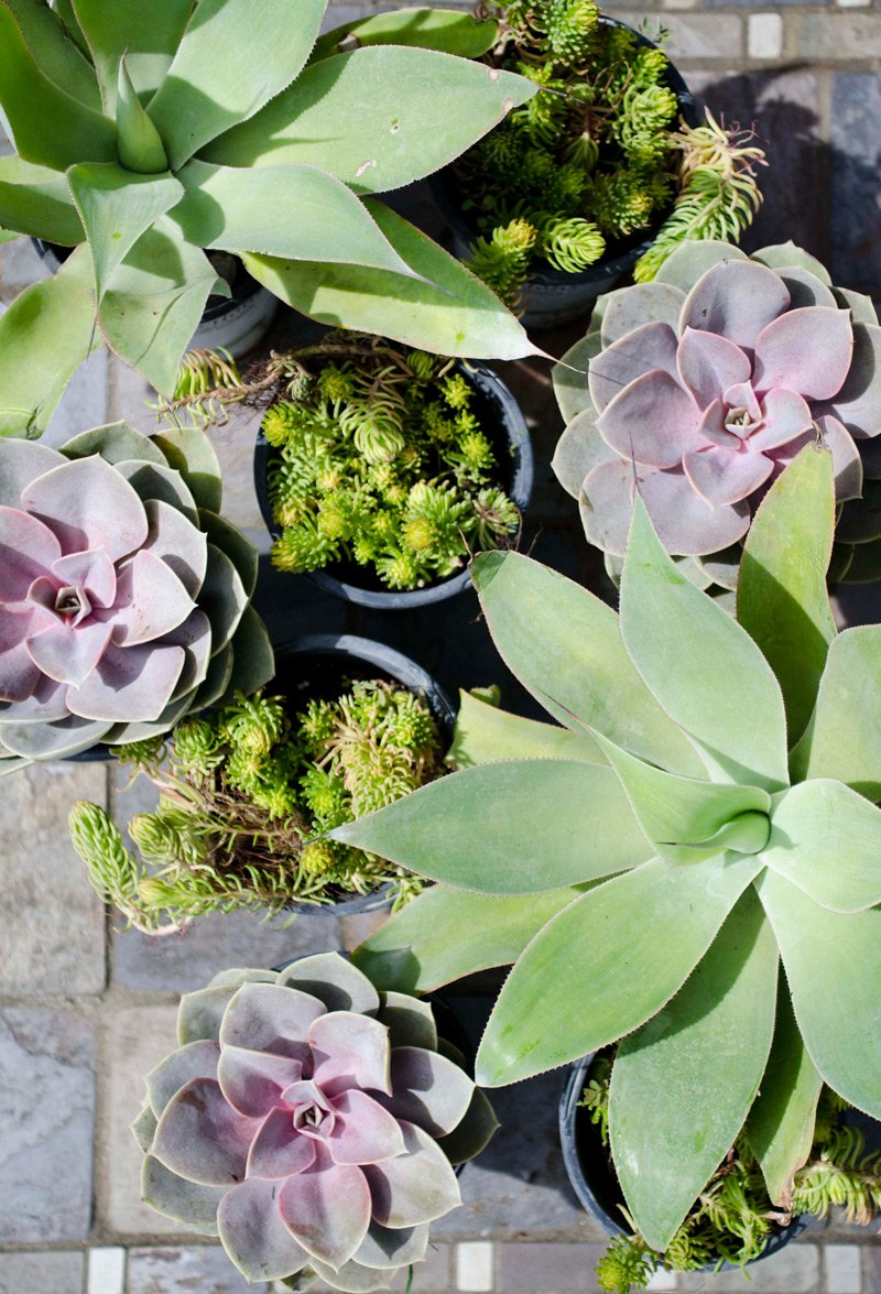 THE BEST PLANTS FOR A LOW MAINTENANCE WINDOW BOX | Thou Swell https://thouswell.com/the-best-plants-for-a-carefree-window-box/