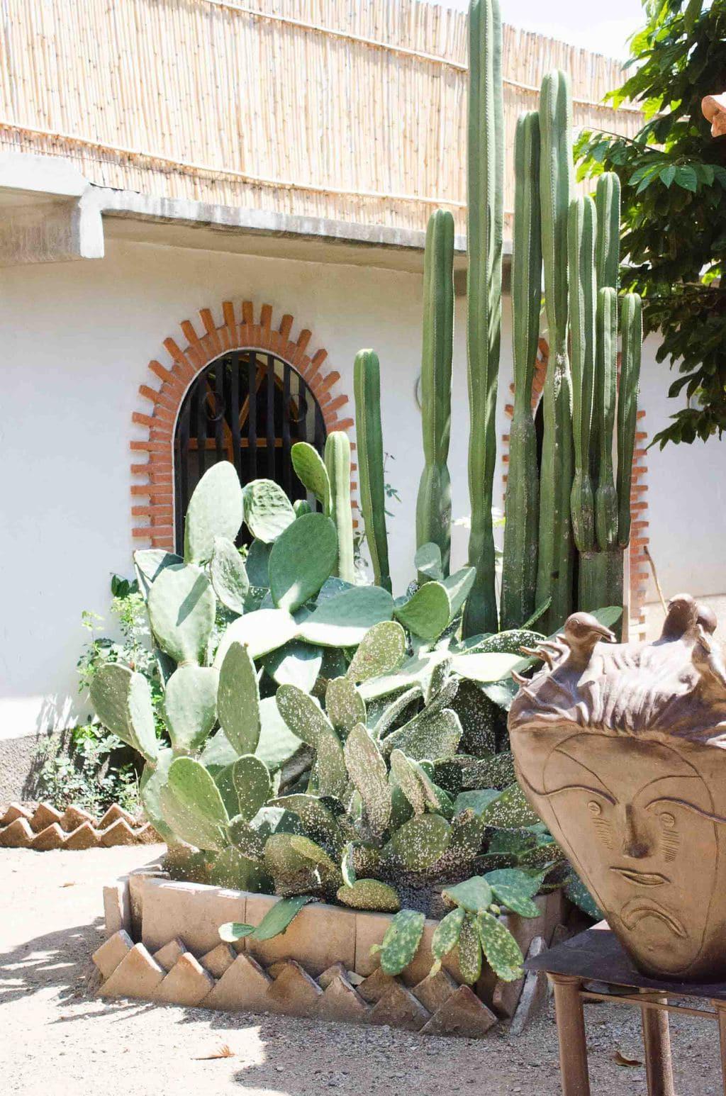 Cactus in Oaxaca, Mexico