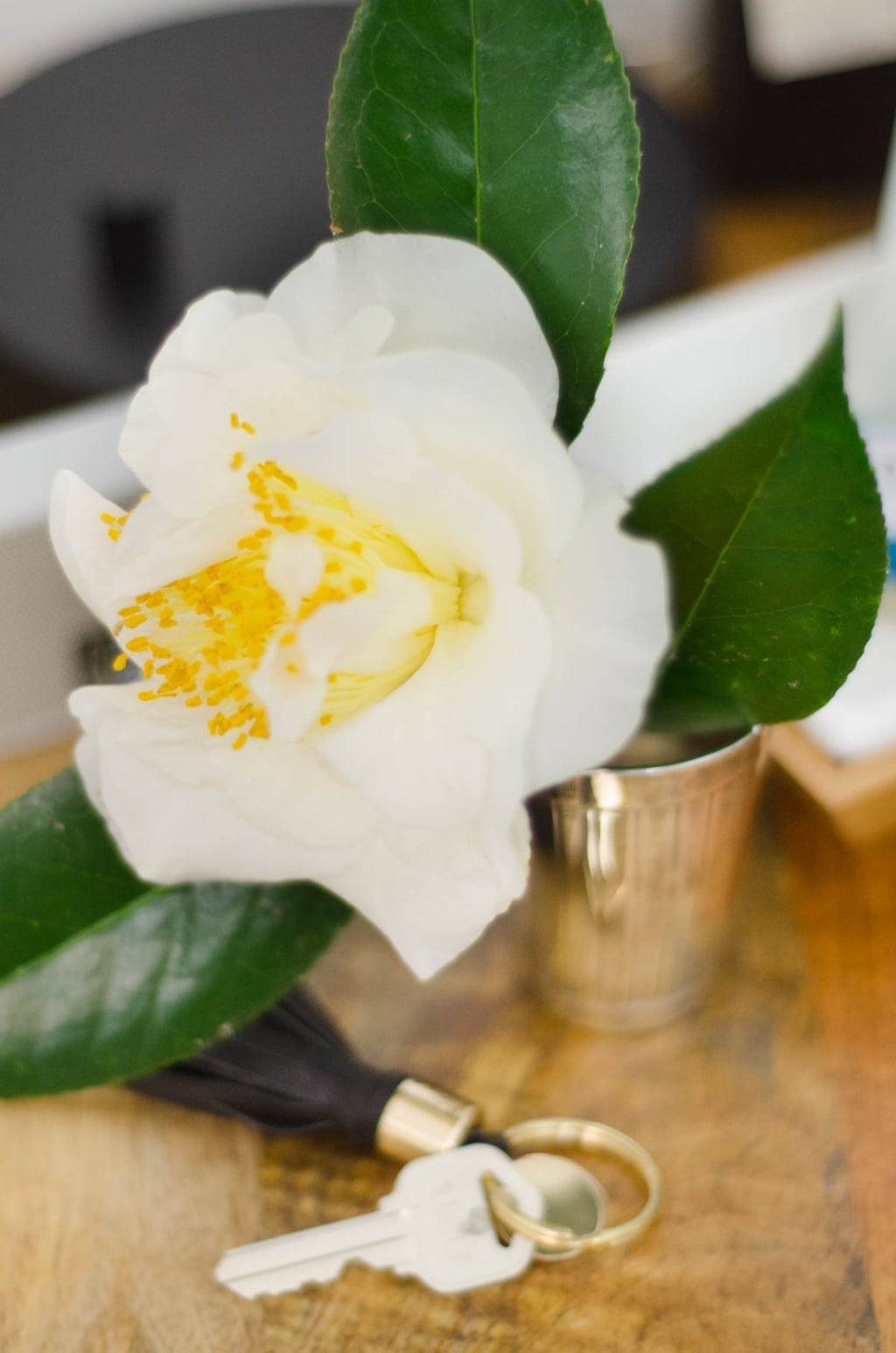A winter camellia bloom on the nightstand.