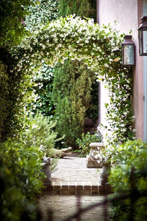 Climbing star jasmine creates an archway in a courtyard garden via @thouswellblog