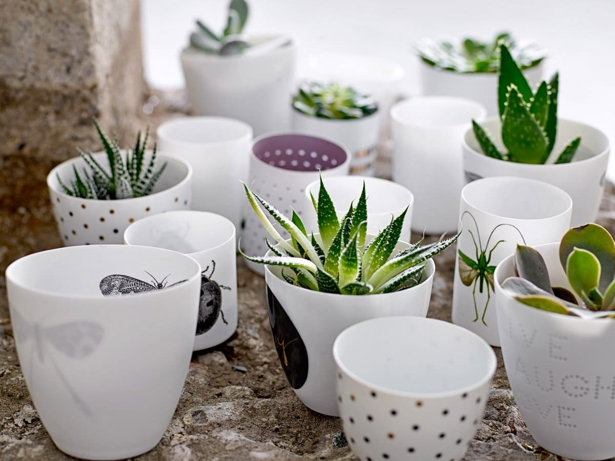 Succulents planted in cups on @thouswellblog