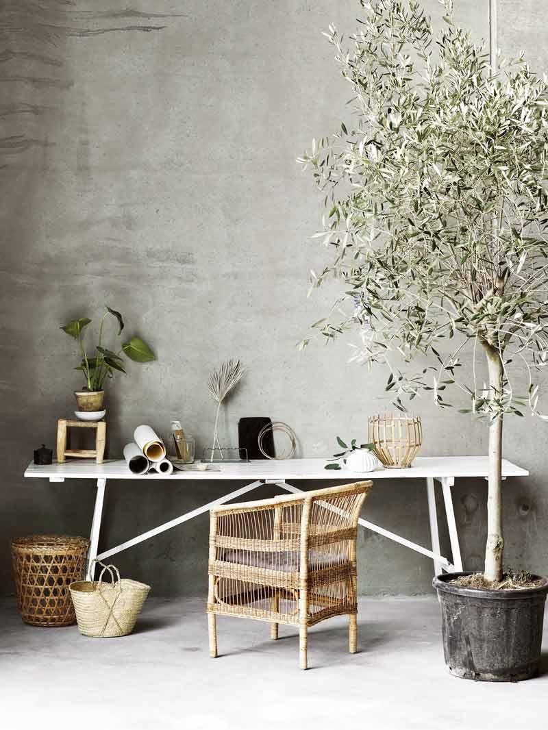 Indoor olive tree modern desk styling on Thou Swell @thouswellblog