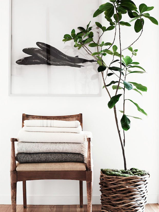 Indoor plant in wicker basket, modern interior styling on Thou Swell @thouswellblog