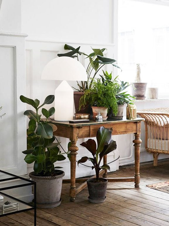 Collection of houseplants with modern table lamp on Thou Swell @thouswellblog