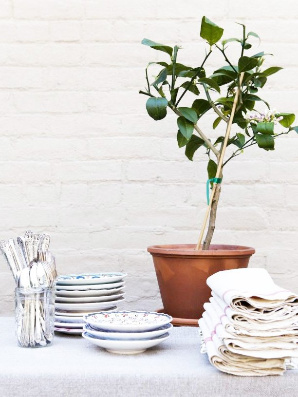 Mini potted citrus tree with entertaining essentials for elegant party set-up on Thou Swell @thouswellblog