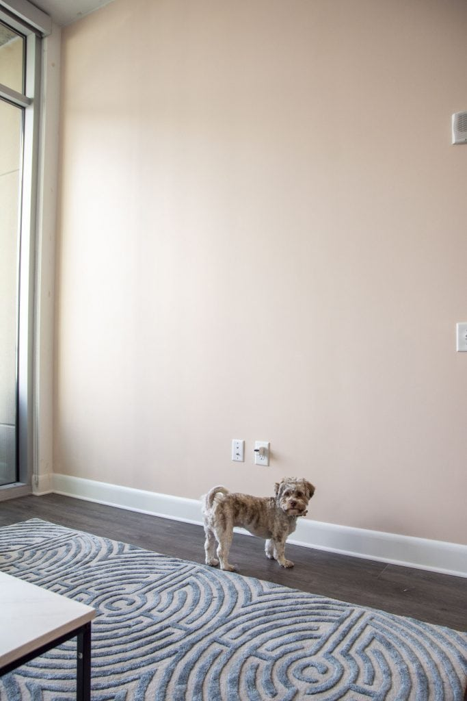 "Light pink accent wall ""Wing It"" by Clare paint in Midtown Atlanta apartment on Thou Swell #pink #pinkwall #pinkpaint #accentwall #homedesign"