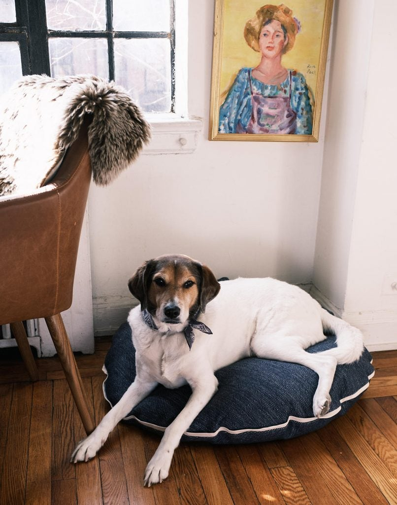 Madewell x Parachute sleep collection, dog bed on Thou Swell #dog #dogbed #bed #pillow