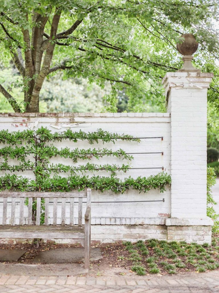Espalier vine landscaping design on brick wall in elegant Memphis home tour on Thou Swell #hometour #housetour #traditionalhome #interiordesign #homedesign #homedecorideas #traditionaldesign #homedecor